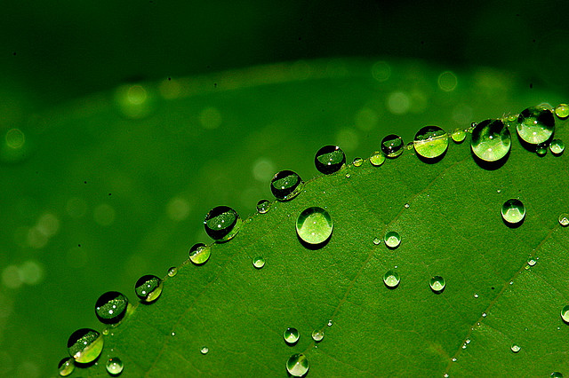 fresh-rain-drop